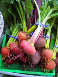 beets-just-harvested.jpg