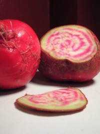 funky-candy-cane-beet.jpg