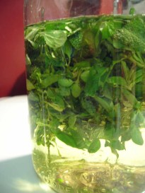 herbs-floating-in-oil-1.jpg