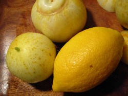 lemon-cucumbers.jpg