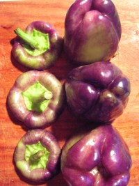purple-peppers.jpg