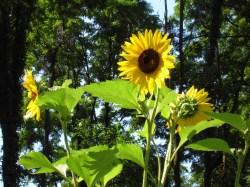 sunny-threesome.jpg